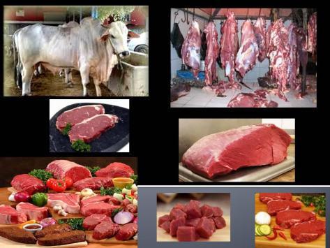 cara memilih daging sapi